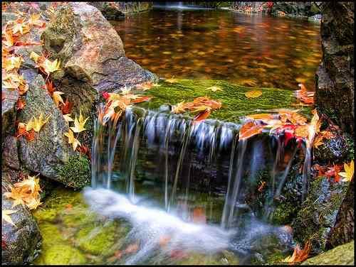 3018059153 colorfall 1 O jardim mais bonito do mundo