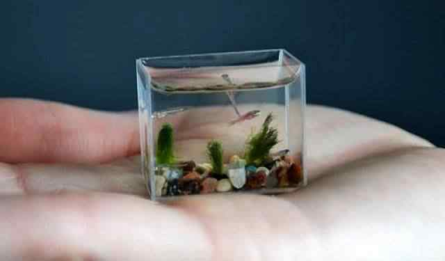 worlds smallest aquarium Artista cria o menor aquario do mundo