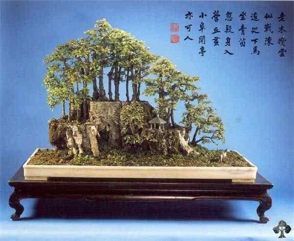 01 sageretia theezans 20101030 1030289724 Bonsai: A arte de criar árvores em miniatura