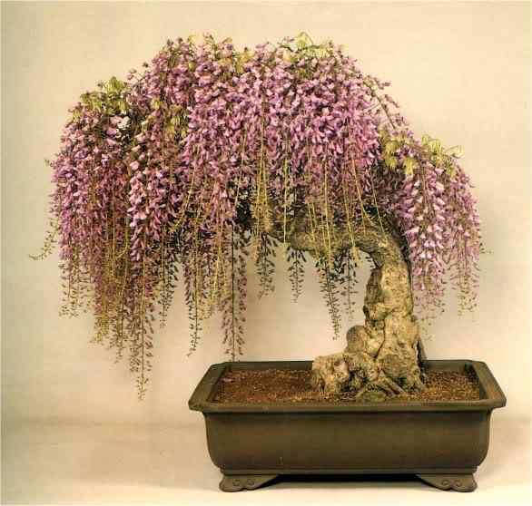102 11 Bonsai: A arte de criar árvores em miniatura