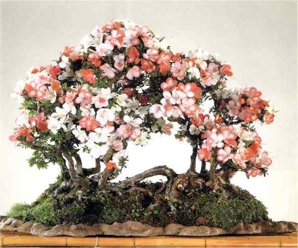 107 1 Bonsai: A arte de criar árvores em miniatura