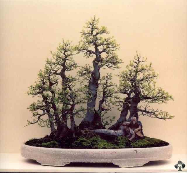 16 wong penjing 20101030 1196109847 Bonsai: A arte de criar árvores em miniatura