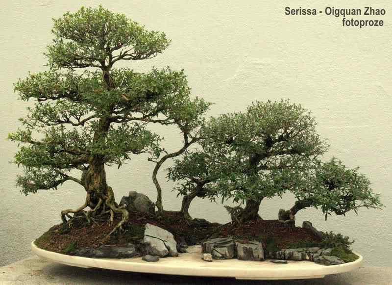 181 Bonsai: A arte de criar árvores em miniatura