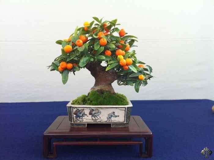 188977 20110404 1585602717 Bonsai: A arte de criar árvores em miniatura