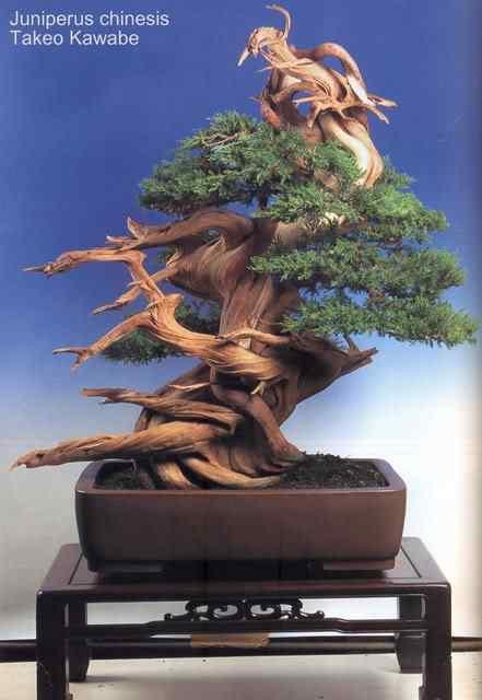 20 tif Bonsai: A arte de criar árvores em miniatura