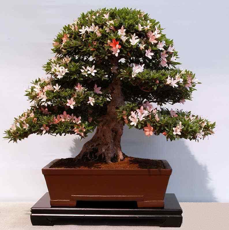 2004060087 Bonsai: A arte de criar árvores em miniatura