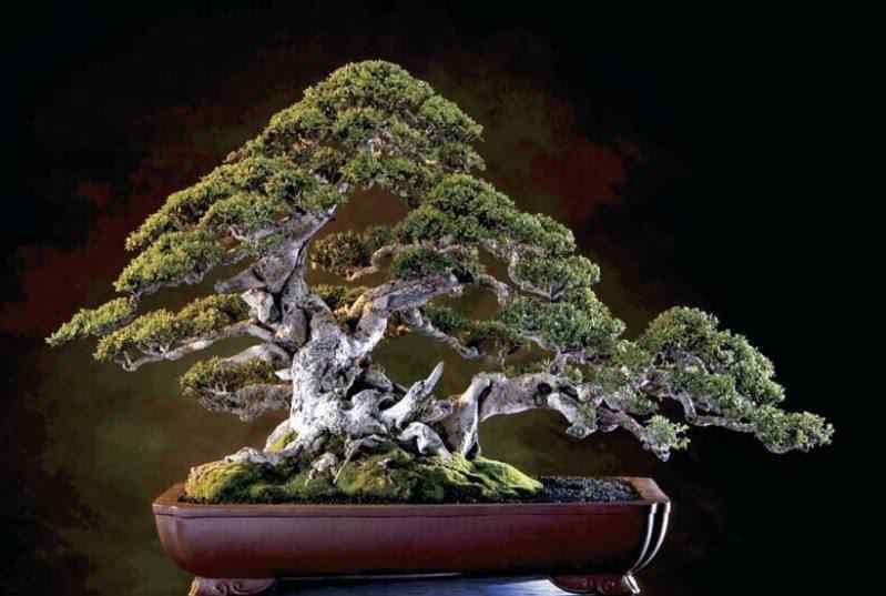 251 Bonsai: A arte de criar árvores em miniatura