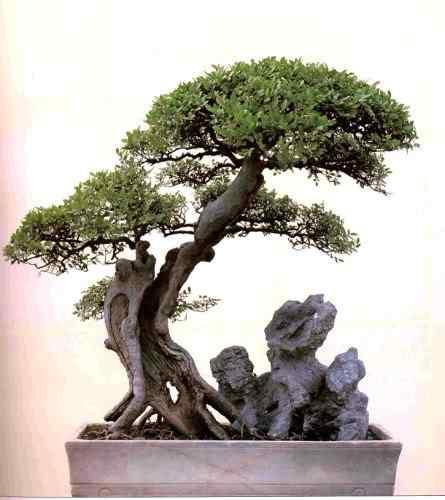 401 Bonsai: A arte de criar árvores em miniatura