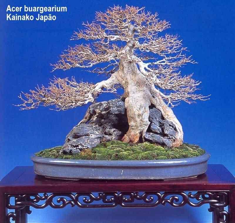 51 Bonsai: A arte de criar árvores em miniatura