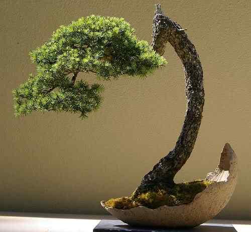 534259907 421a4d96c4 Bonsai: A arte de criar árvores em miniatura