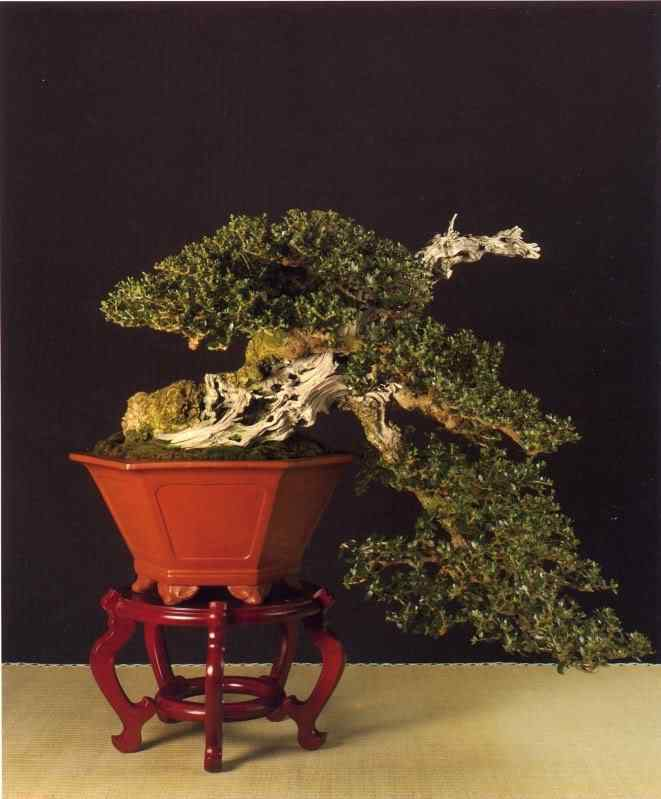 631 Bonsai: A arte de criar árvores em miniatura