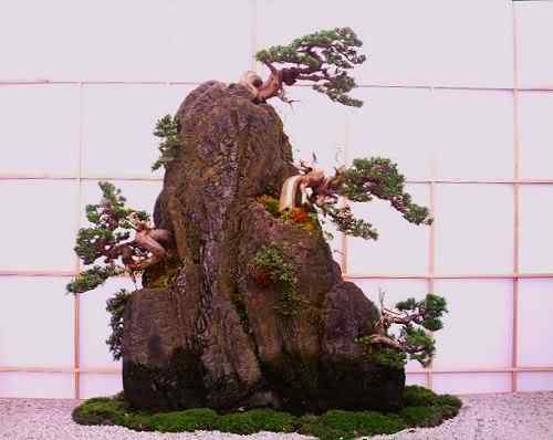 ChelseaFlowerShow2006rockplanting Bonsai: A arte de criar árvores em miniatura
