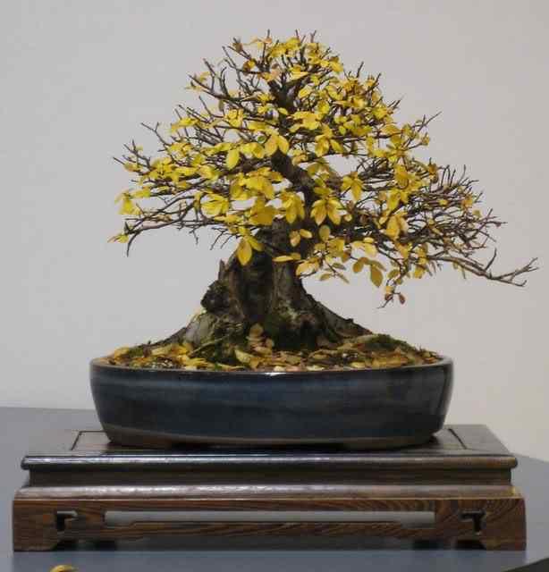 IMG 1901 Bonsai: A arte de criar árvores em miniatura