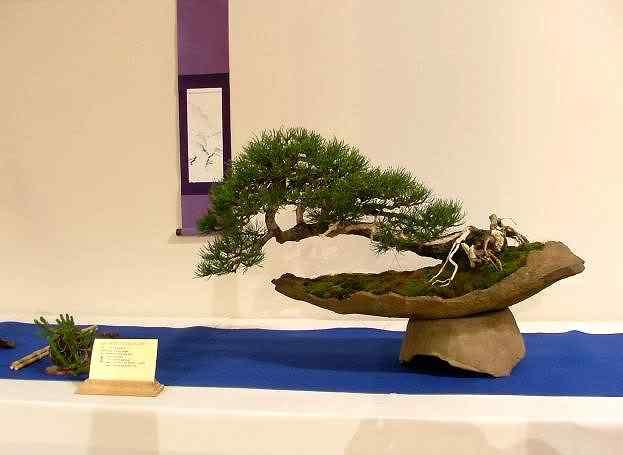 NoelandersTrophyVII41 Bonsai: A arte de criar árvores em miniatura