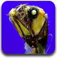 animais de alta profundidade Artigos legais do Mundo Gump