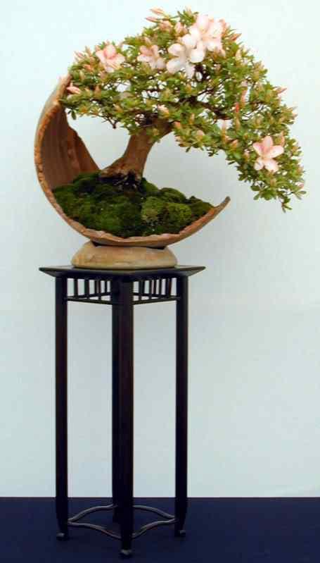azalee4 Bonsai: A arte de criar árvores em miniatura