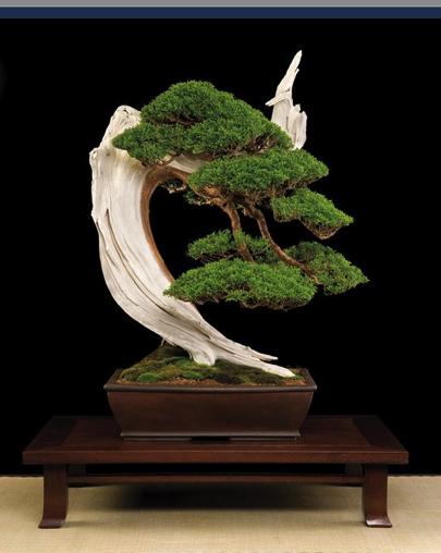 b3 Bonsai: A arte de criar árvores em miniatura