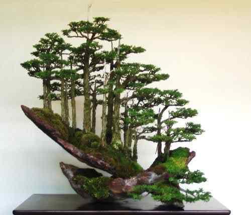 bonsai cascata Bonsai: A arte de criar árvores em miniatura