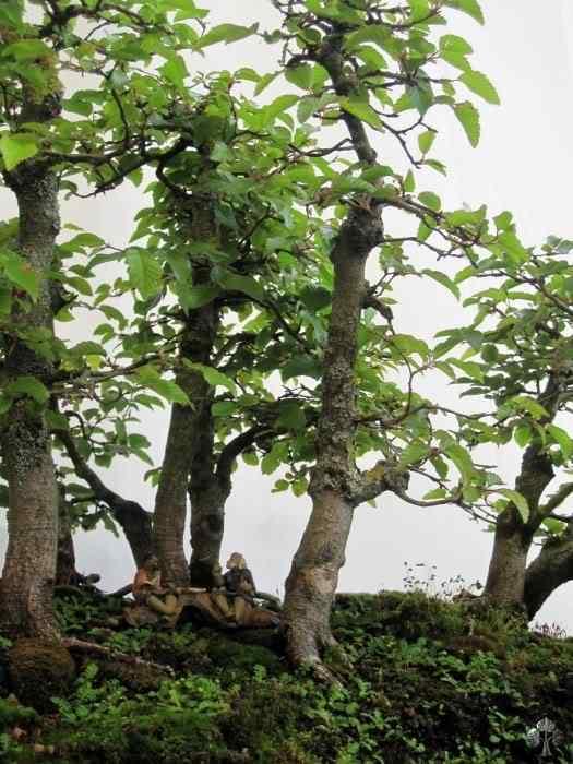 bonsaishow delft2010 20101031 1147539410 Bonsai: A arte de criar árvores em miniatura