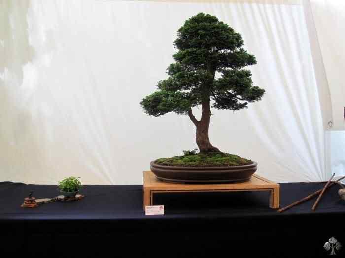 bonsaishow delft2010 20101031 1423382361 Bonsai: A arte de criar árvores em miniatura