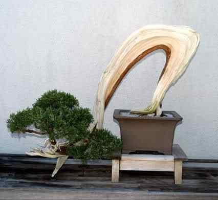 bonsaivirtualtour 32 Bonsai: A arte de criar árvores em miniatura