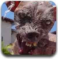 cachorro feio Artigos legais do Mundo Gump