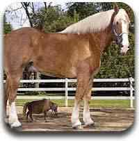 cavalo gigante Artigos legais do Mundo Gump