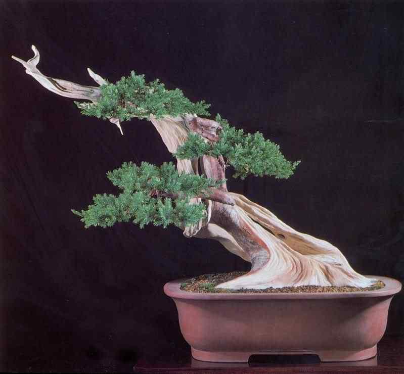 digitalizar0045 Bonsai: A arte de criar árvores em miniatura