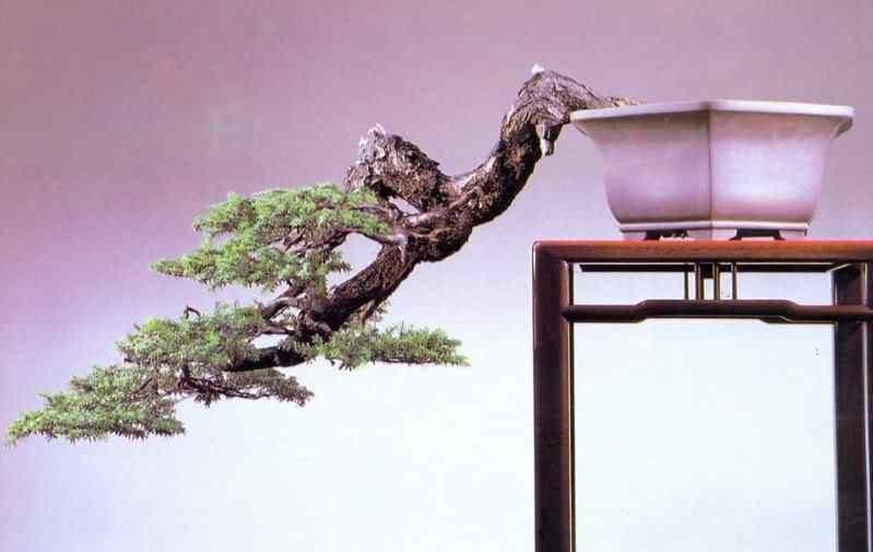 digitalizar0058 Bonsai: A arte de criar árvores em miniatura