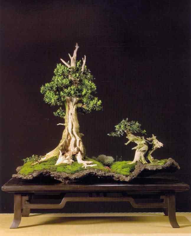 digitalizar0207 Bonsai: A arte de criar árvores em miniatura