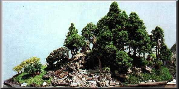 foto02 museo Bonsai: A arte de criar árvores em miniatura