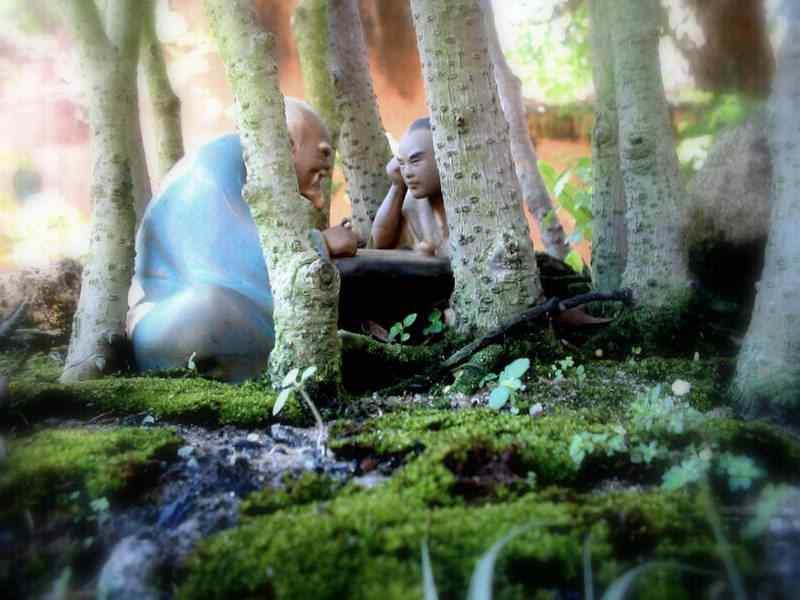 fotos 11611 Bonsai: A arte de criar árvores em miniatura
