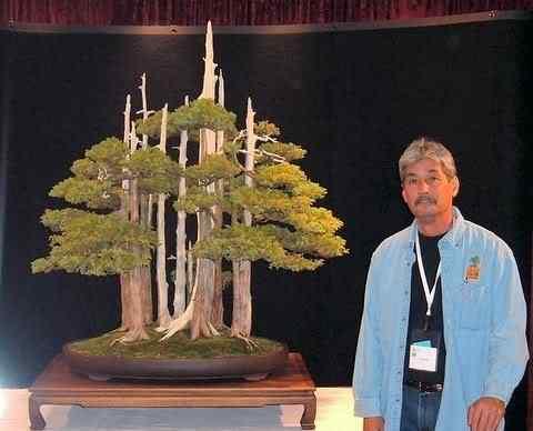 goshinand me Bonsai: A arte de criar árvores em miniatura