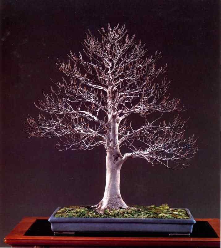 jab 112 Bonsai: A arte de criar árvores em miniatura