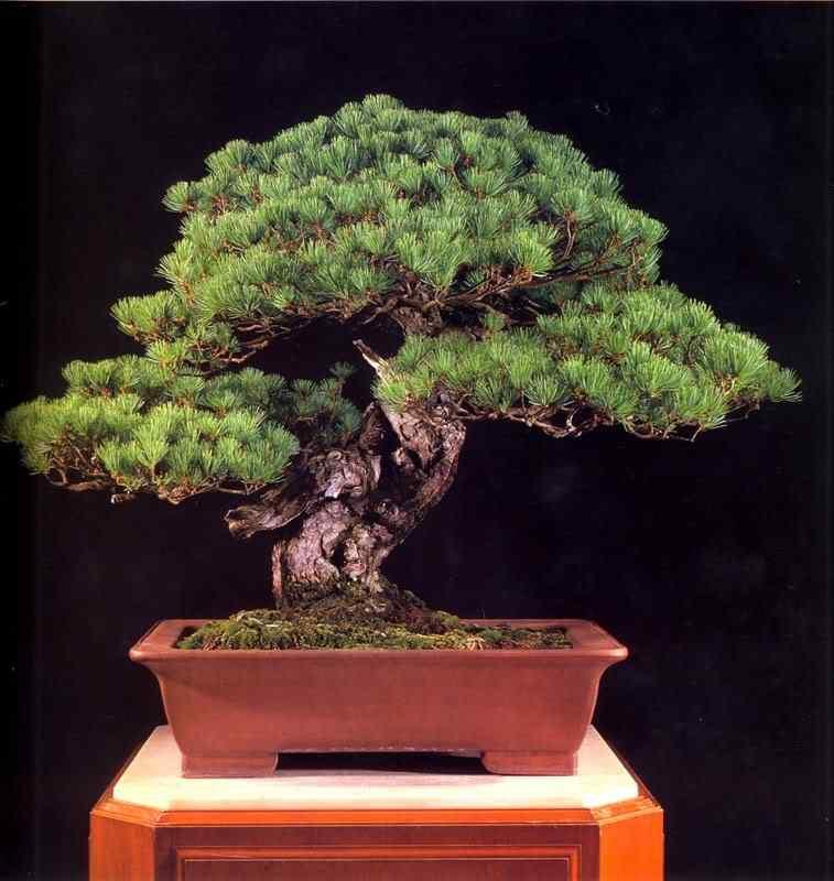 jba 110 Bonsai: A arte de criar árvores em miniatura