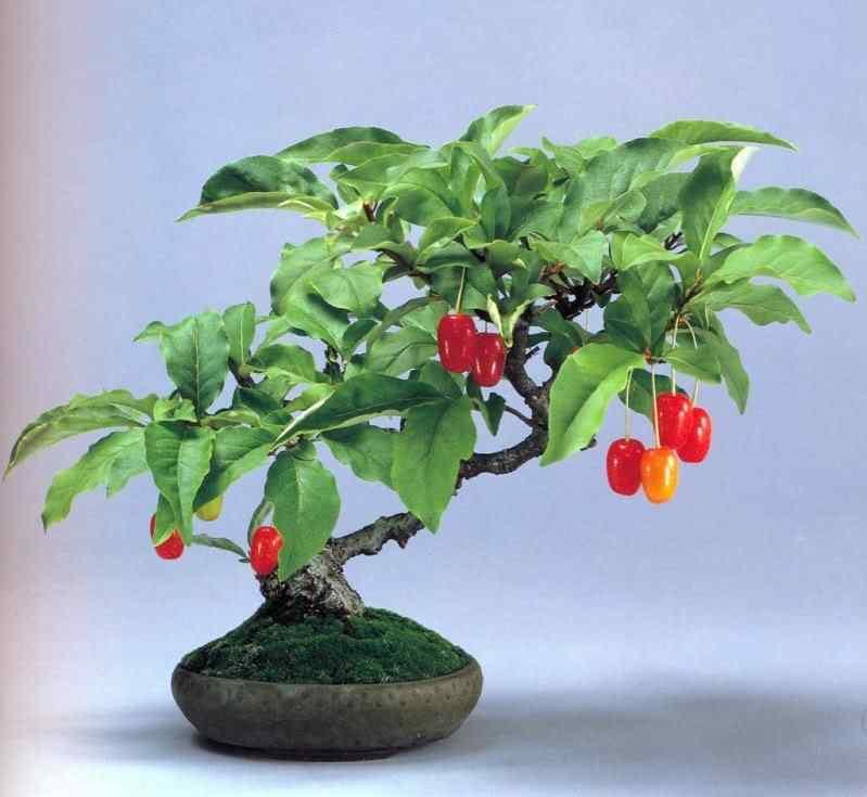 k murata 10 Bonsai: A arte de criar árvores em miniatura