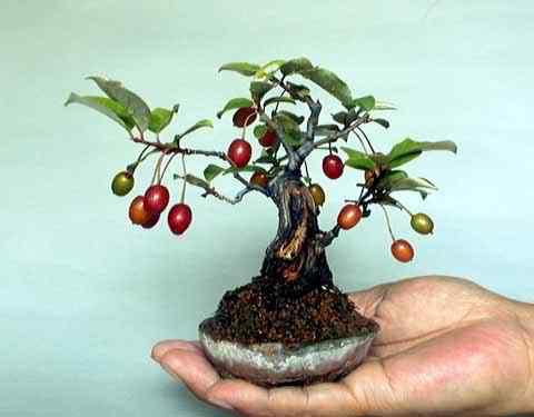 m8 1 Bonsai: A arte de criar árvores em miniatura