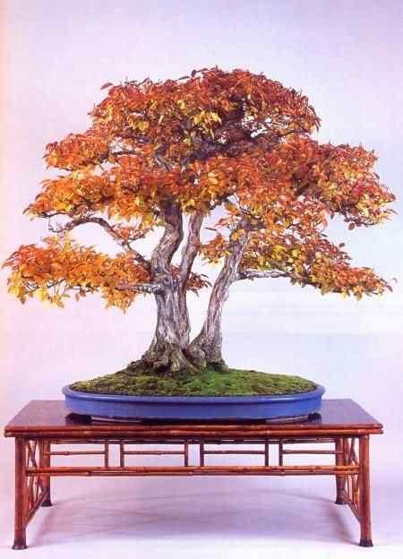 mitsuo 22 Bonsai: A arte de criar árvores em miniatura