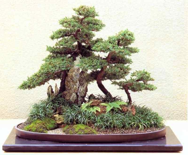 pa 112 Bonsai: A arte de criar árvores em miniatura