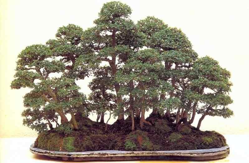 pa 911 Bonsai: A arte de criar árvores em miniatura