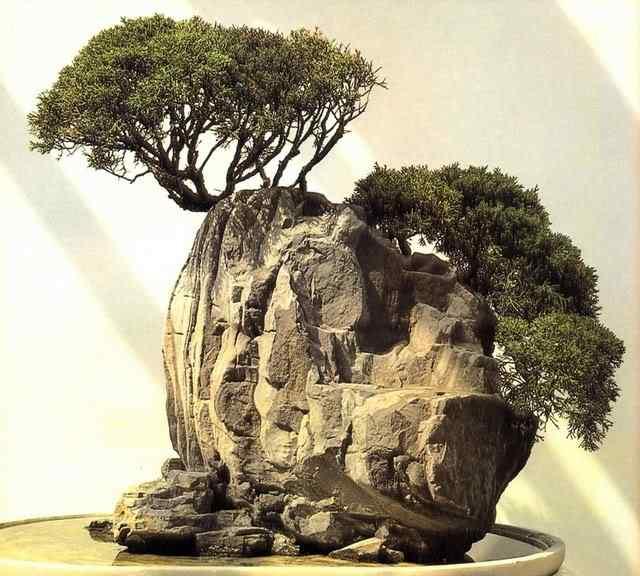 paul l 10 Bonsai: A arte de criar árvores em miniatura