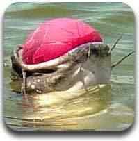 peixe engasgado Artigos legais do Mundo Gump