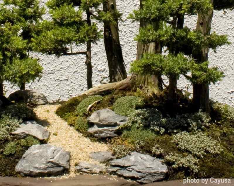 pen 10 Bonsai: A arte de criar árvores em miniatura