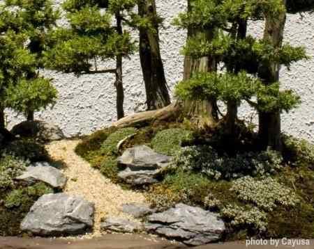 pen 101 Bonsai: A arte de criar árvores em miniatura