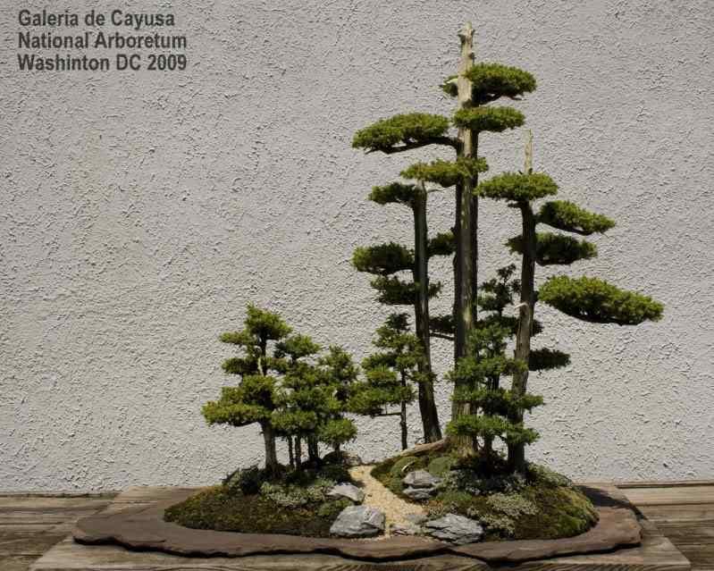 pen 9 Bonsai: A arte de criar árvores em miniatura