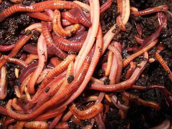 raining worms Bizarra chuva de vermes assusta pessoas