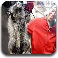 rato na china Artigos legais do Mundo Gump