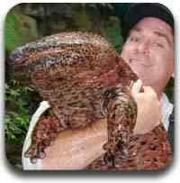 salamandra gigante Artigos legais do Mundo Gump