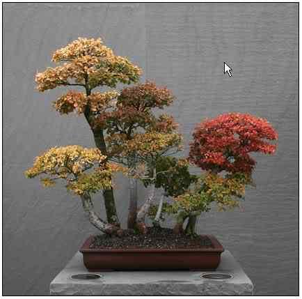 screenhunter 21 Bonsai: A arte de criar árvores em miniatura