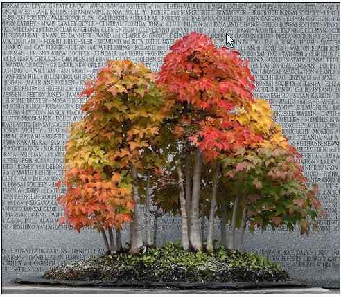 screenhunter 3 2 Bonsai: A arte de criar árvores em miniatura